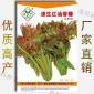 200粒:速生红油香椿种子(k810)香铃子芽雪桩头大红椿树天春苗白皮