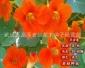 旱金莲 野花组合 花海营造 草花种子 边坡绿化灌木种子老赵种业
