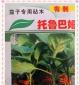 寿光批发供应各种茄子专用嫁接砧木-托鲁巴姆(有刺、无刺)
