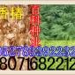 供应:香椿种子 椿芽菜专用种子(货到付款)